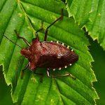 К чему снятся клопы: стоит опасаться паразитов?