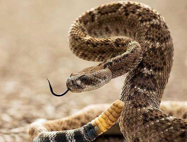 сонник убить змею во сне ножом