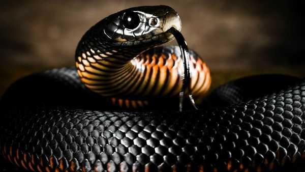 К чему снится убить змею: хорошо ли это. Основные толкования к чему снится убить змею: ножом или голыми руками - Автор Екатерина Данилова