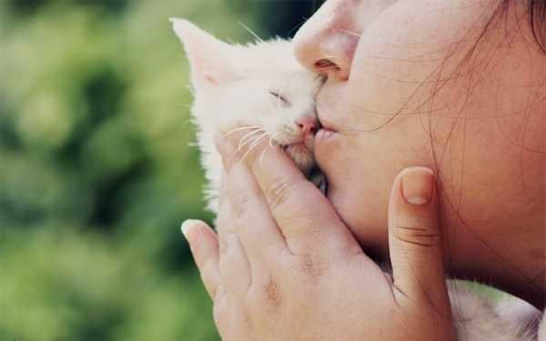 К чему снятся маленькие котята женщине или мужчине сонник