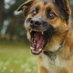 К чему снится собака, которая кусает: толкования для сновидца