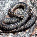 Приснилась змея