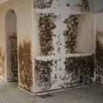 Чем опасна плесень в квартире для человека и как избавиться от нее