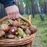 К чему снится сбор грибов: толкования и значения странного сна