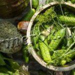 Рецепты хрустящих малосольных огурцов