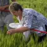 Защита растений от болезней и вредителей различными методами