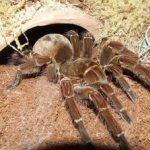 К чему снится по соннику большой паук